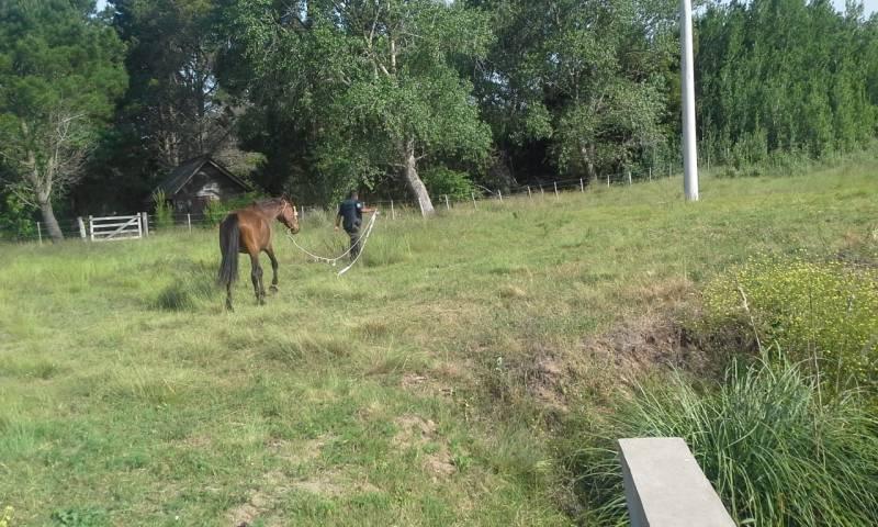 caballo policia oeste gesell 1
